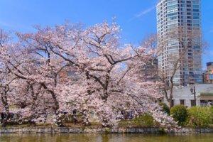桜の季節1