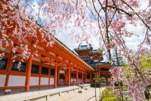 桜の季節12