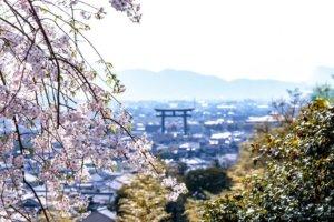 桜の季節14