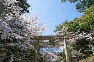 桜の季節16