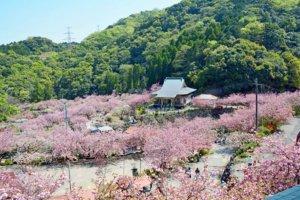 桜の季節17