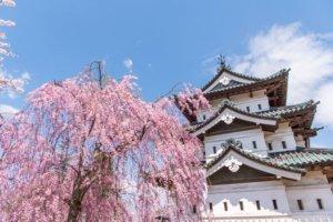 桜の季節19
