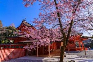 桜の季節6