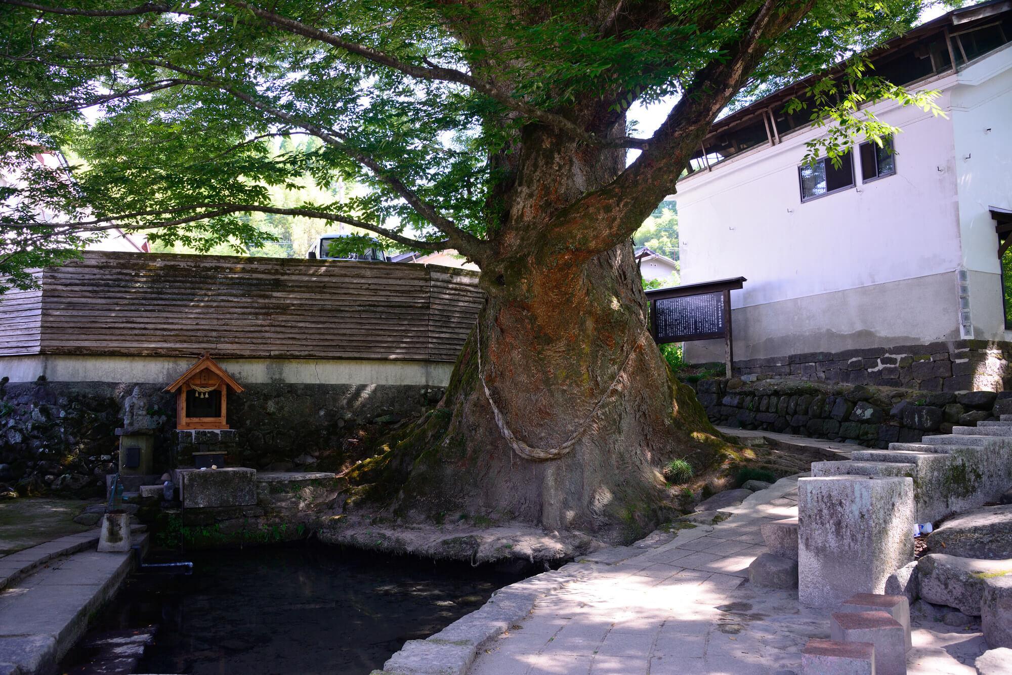 熊本でおすすめのパワースポット9