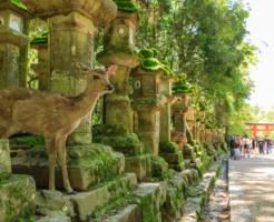【2020年初詣】奈良おすすめ神社ランキングはこちら!